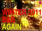 BandB winter 2011